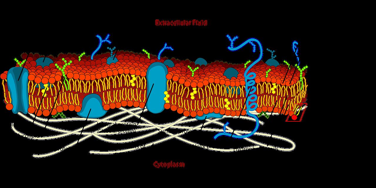 biology-41522_1280